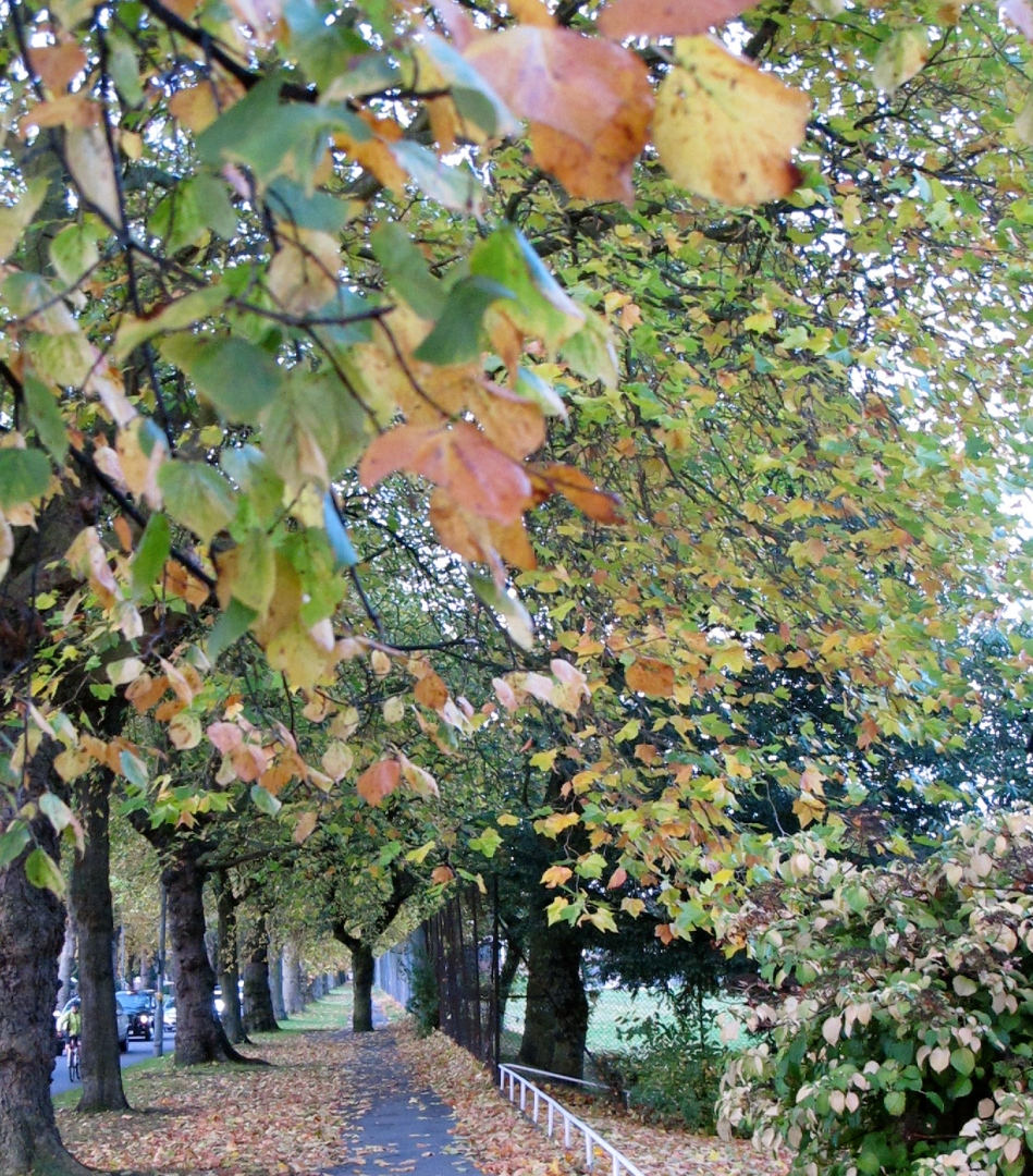 Autumnal Canopy